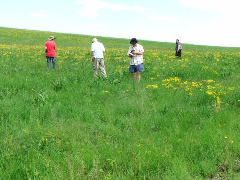 Admiring the wealth of flora to be found in the grasslands