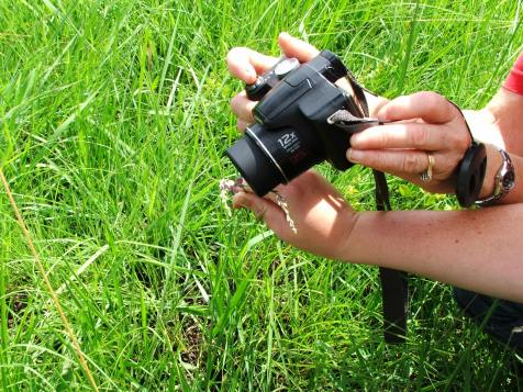 Photographing the flora and insects!
