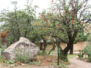 Indigenous gardens in the Giants castle Camp