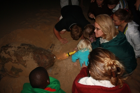 Mary explains the nesting process to our Kids, whilst watching a Loggerhead Turtle lay her eggs